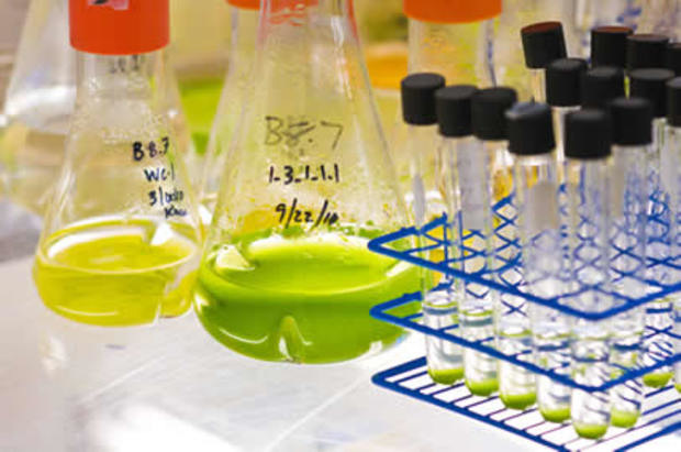 research papers biodiesel algae 8 central pros and cons of algae biofuel renewable energy laboratory conducted research of high-oil output algae every essay and research paper that.