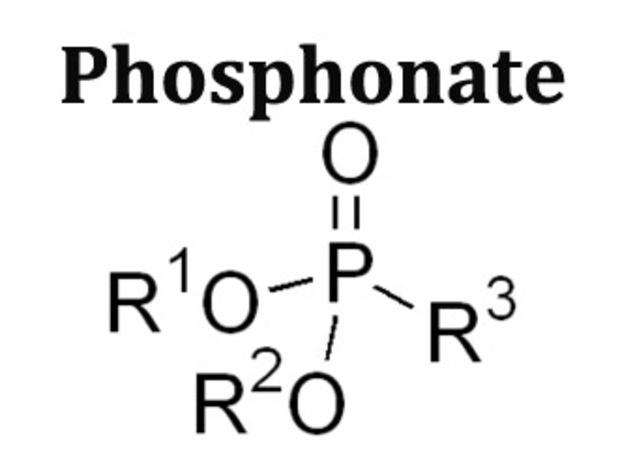 Phosphonate Market